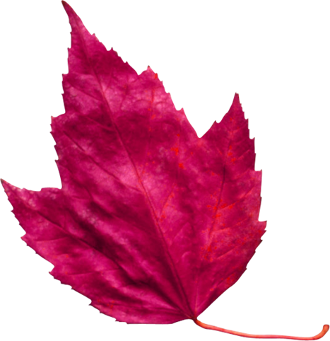 برگ پاییز