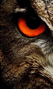 owl - طراحی اسلایدر وب سایت
