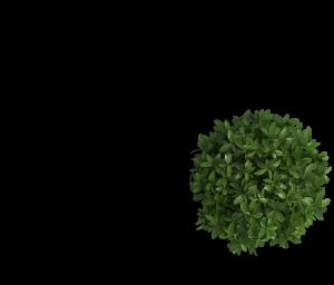 plant - طراحی اسلایدر سایت